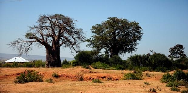 sukuma landscape