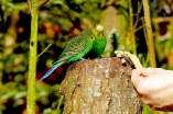 birds-1287995__340