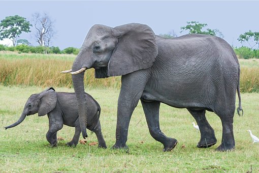 elephant-2923916__340