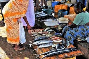 fish-market-fish