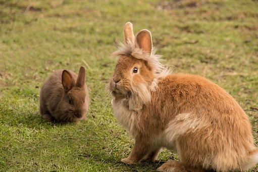 rabbit-elder