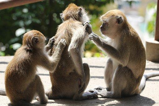 monkeys-