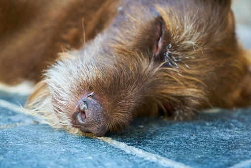 dog-dead
