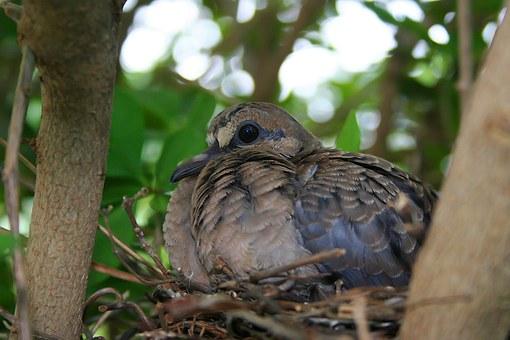 nest-bird