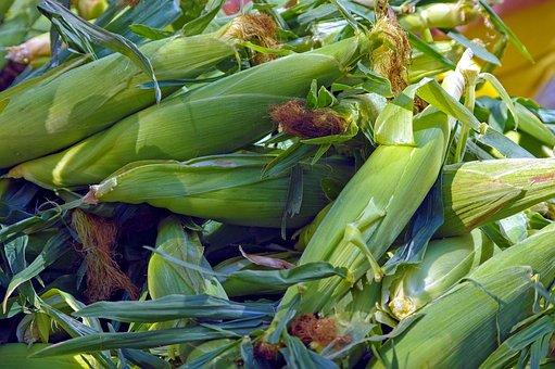 maize food