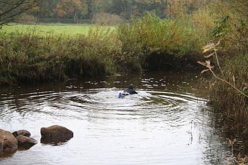 swimmer-