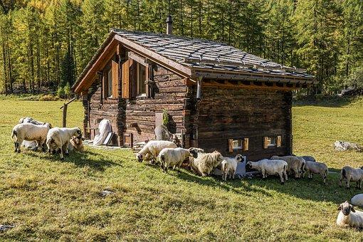 sheep-hut