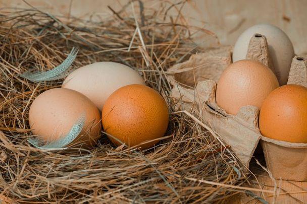 chicken-eggs