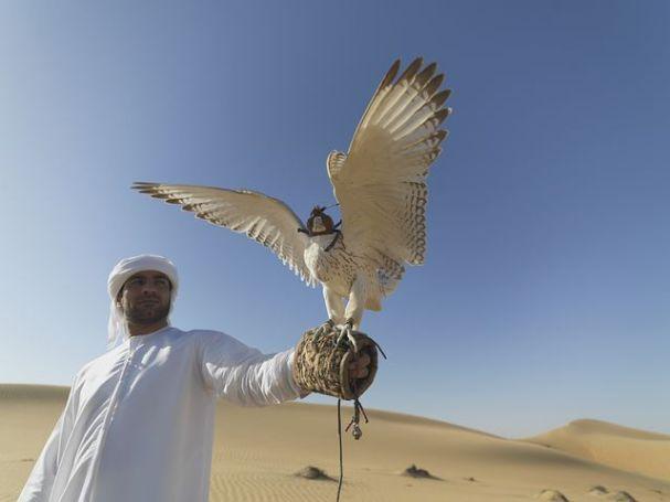 falcon-