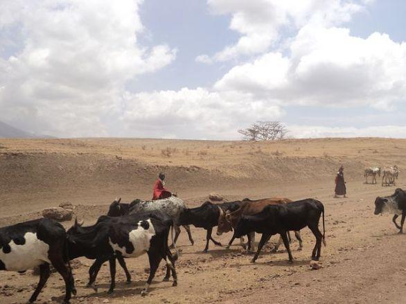 nsabhi masai