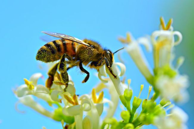 honey-bees2