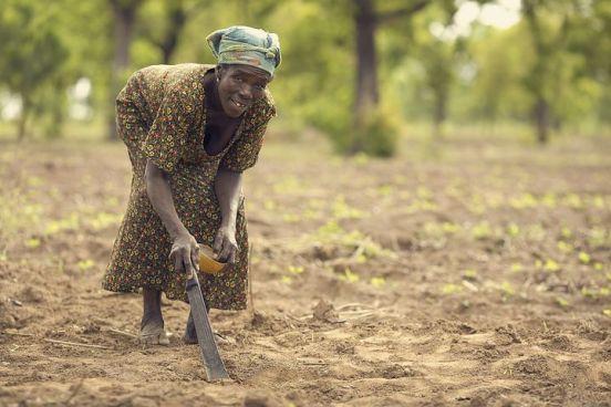 planting nimi nkima
