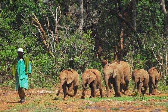 bhupanga baby-elephants