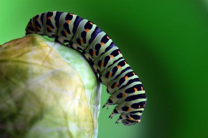 caterpillar-