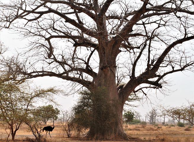 tree-3842194__480