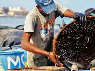 fish-market-