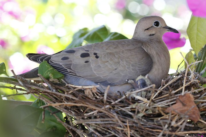 birdie-