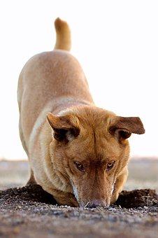 dog----1