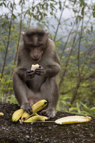 monkey-3