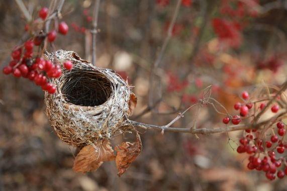 the-birds-nest-