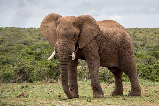 elephant-1-