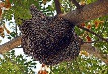 beehive-
