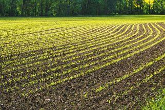 field-