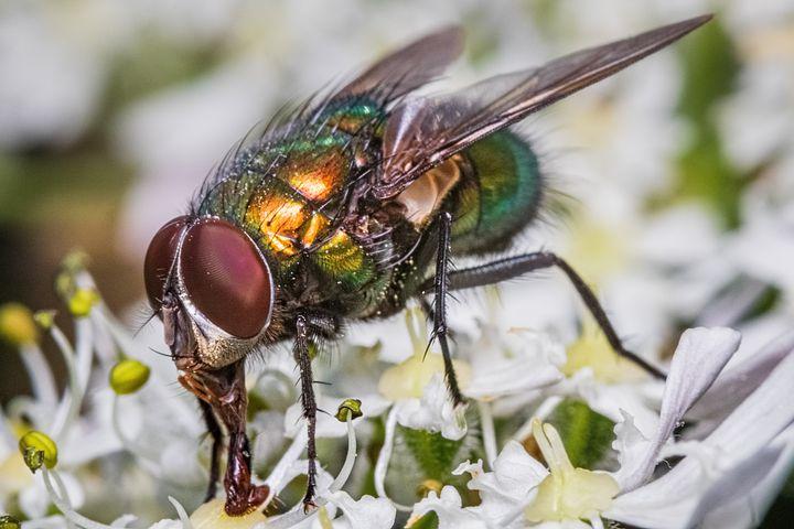 fly-2