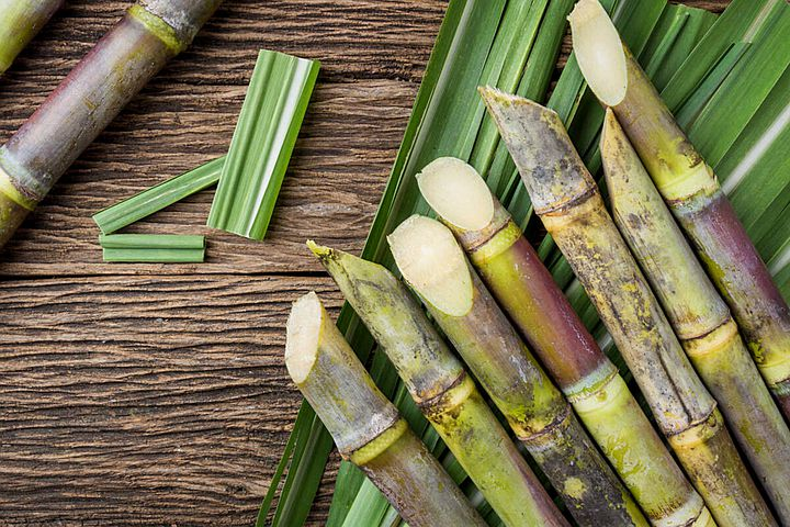 sugarcane-